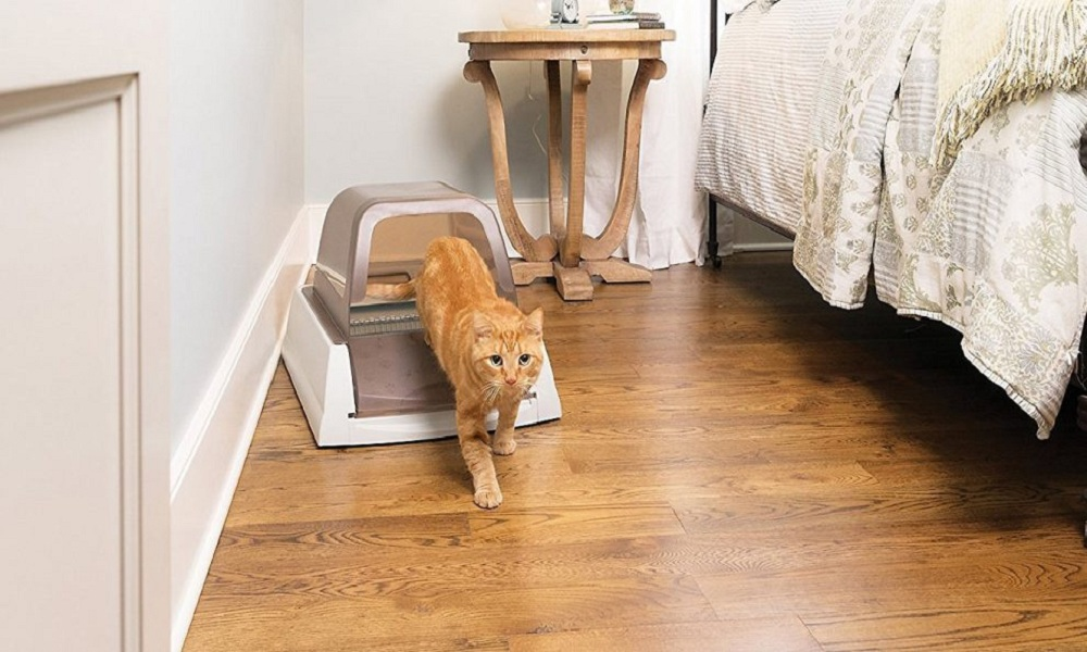 Best Self Cleaning Cat Litter Box Reviews
