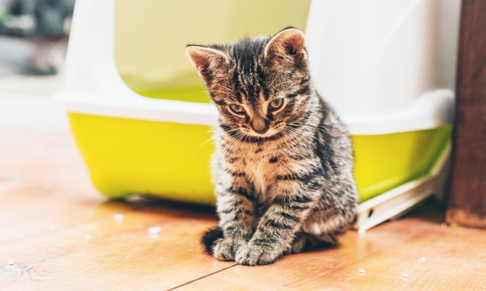 Why Would a Cat Stop Using the Litter Box