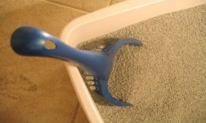 A Quick Guide to Litter Box Maintenance