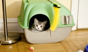How to Train Your Cat to Use the Litter Box